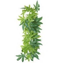 Plante en soie, Abutilon D 20 x 30 cm