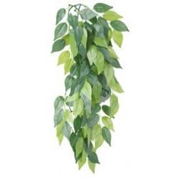 Plante en soie, Ficus D 20 x 30 cm