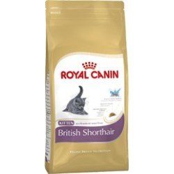 FBN BRITISH SHORTHAIR KITTEN 2KG