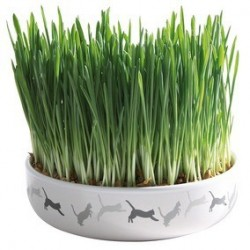 Ecuelle en ceramique avec herbe a chats D 15 x 4 cm, 50 g de graines